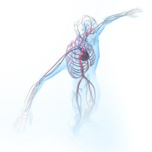 血液 血管健康