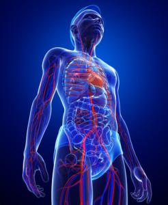 血流 交感神経